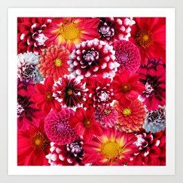Dahlias flowers Art Print