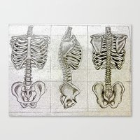 bones Canvas Prints featuring Bones by Kristen Willsher