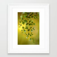 fern Framed Art Prints featuring Fern by Mandy Disher