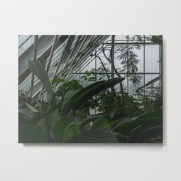 Greenhouse magic Metal Print