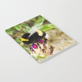 bumble bee on the dunes I Notebook