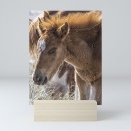 Salt River Sleepy Foal Mini Art Print