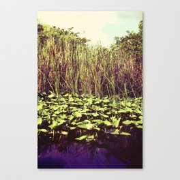 Reeds in the Marsh Canvas Print