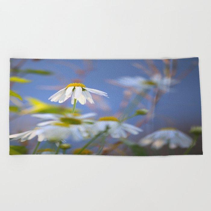 Daisies on a sunny summer day with blue sky Beach Towel