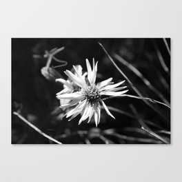Small Wildflower B&W Canvas Print