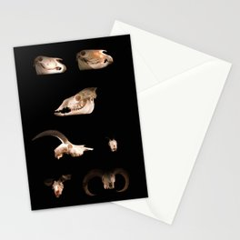 Skull Cabinet Stationery Cards
