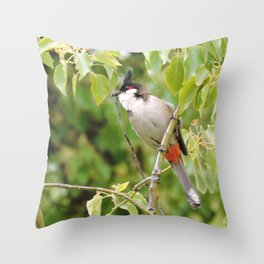 Red-Whiskered Bulbul -- 2 Throw Pillow