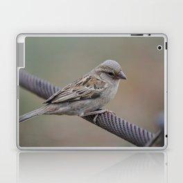 Pilanesberg Bird 01 Laptop & iPad Skin