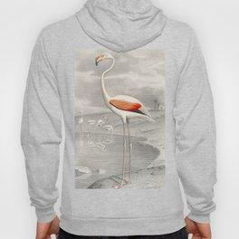 Exotic Flamingo Bird - Minimalism Drawing Hoody