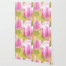 Spring is here with wonderful  colors - close-up of tulips flowers Wallpaper