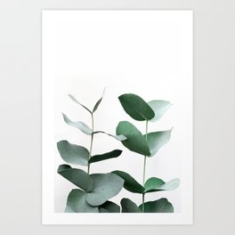 Eucalyptus 5 Art Print