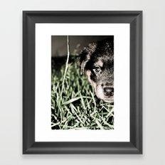ROTTIE LOVE Framed Art Print