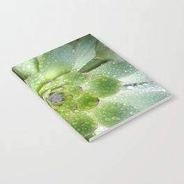 Succulent Rain Drops Notebook
