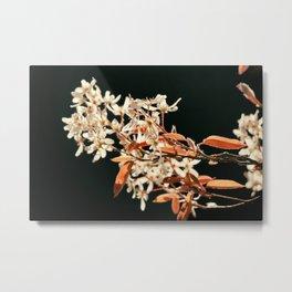 Blooming Spring Flowers 2 Metal Print