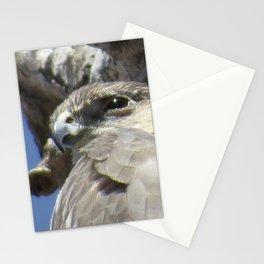 Cooper's Hawk El Bosque Nature Preserve, Albuquerque, NM Stationery Cards