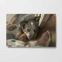A Western Pup Metal Print