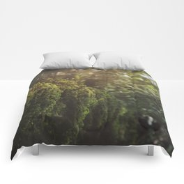timeless melody  Comforters