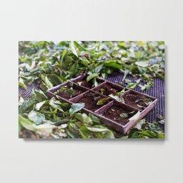 Tea Factory - Photography Art Metal Print