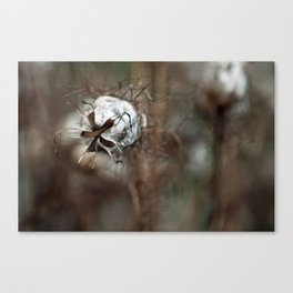 {faded love} Canvas Print