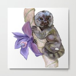 Pygmy Marmoset (Small Monkey) Metal Print