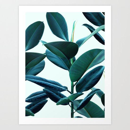 Tropical Rubber Ficus Elastica Plant leaves  Art Print