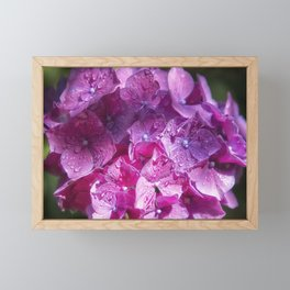 Pink Hydrangea Framed Mini Art Print