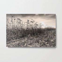 Corn Field 15 Metal Print