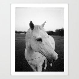 White Horse is White Art Print