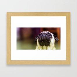 Little puggy pug Framed Art Print