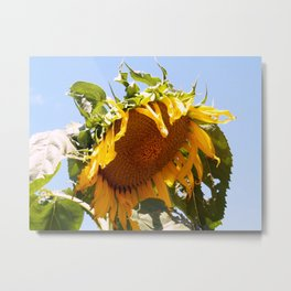 Bursting Sunflower Metal Print
