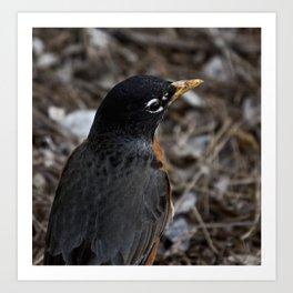 a model bird Art Print