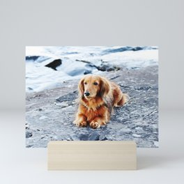 Red longhaired dachshund on waterfront cliff Mini Art Print