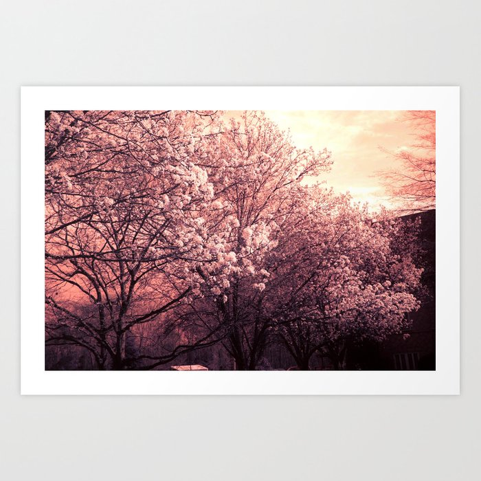 Surreal Ethereal Pink Blossoms Infrared Trees Nature Landscape Art