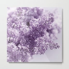 Lilac 166 Metal Print