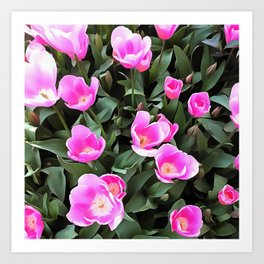 Delicate Pink Tulips Of Istanbul Art Print