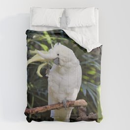 Sulfur-Crested Cockatoo Salutes the Photographer Comforters