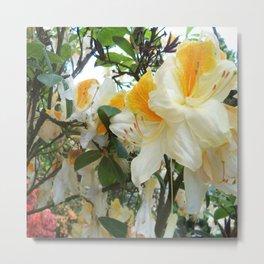 Flowers_Rhododendrons Metal Print