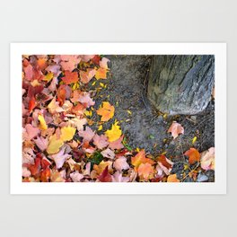 Fallen to the Ground Art Print