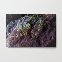 Natural Purple and Green Algae on Coastal Rocks Metal Print