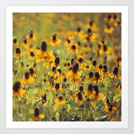 Yellow Hat Dance -- Dreamy Botanical Landscape Mexican Hat Coneflowers Afield Square Art Print