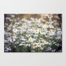 Wild Daisies 4134 Canvas Print