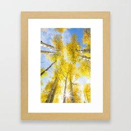 Yellow Aspen Canopy Colorado Art Print Framed Art Print