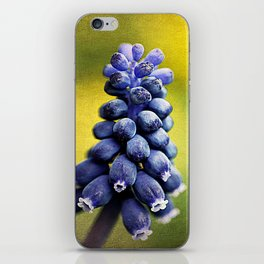 Muscari iPhone Skin