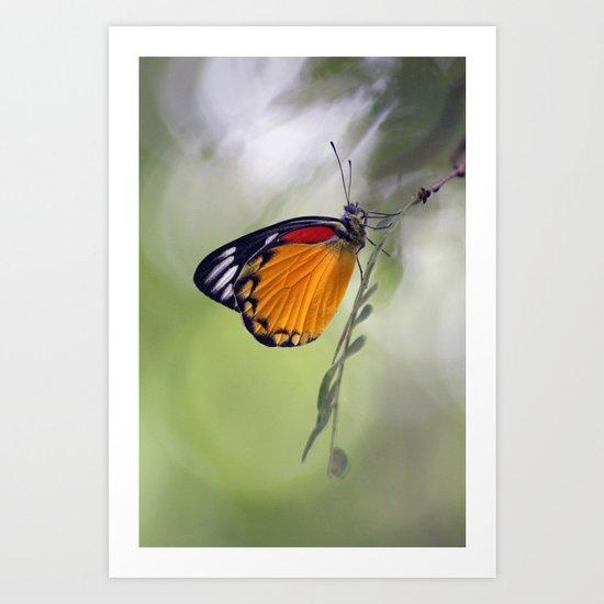 The Butterfly Effect Art Print