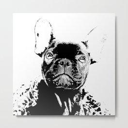 Französische Bulldogge Metal Print
