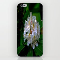 Rhododendron Bloom at Falling Water iPhone & iPod Skin