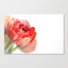 Peony Tulip... Canvas Print