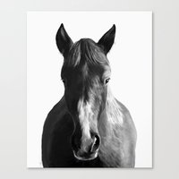 horse Canvas Prints featuring Horse by Amy Hamilton
