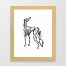 Whippet Framed Art Print
