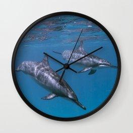 Dolphin swim by Wall Clock